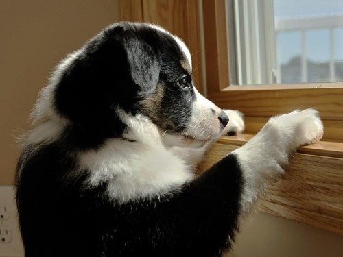 119360970-dog-separation-anxiety-632x475