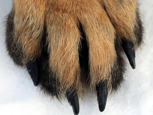 144955358-winter-dog-paw-care-632x475