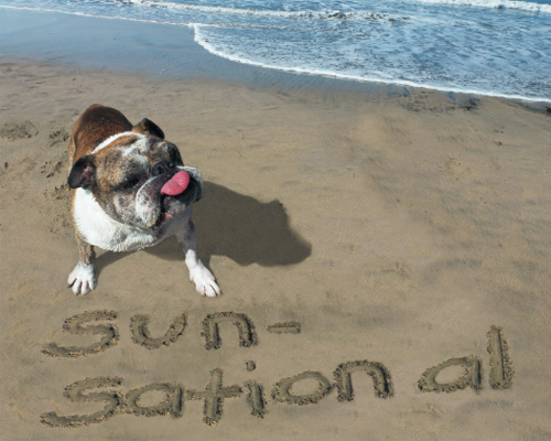dog-beach-sunsational