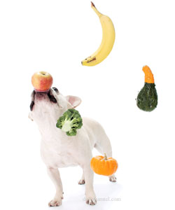 dog-fruits