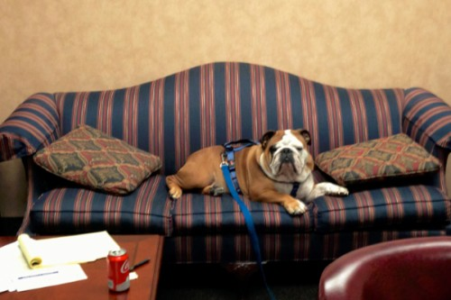 office-bulldog