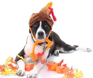 thanksgivingdog